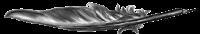 feather - Writofy